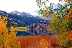 June Lake Fall Colors